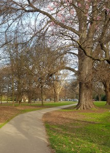 A footpath curving beneath bare-branched trees in Hagley Park. In the upper corner, pink blossoms are visible.